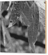 Nature's Tears Wood Print