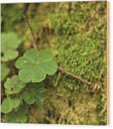 Natures Tiny Work Wood Print