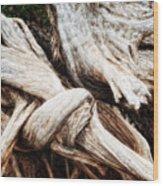 Nature's Twist - Bryce Canyon Wood Print