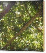 Nature's Upward View Wood Print