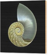 Nautilus Nr.1 Wood Print