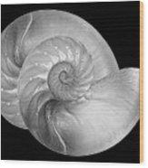 Nautilus Pair In Mono - Horizontal Wood Print
