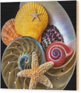 Nautilus With Sea Shells Wood Print