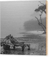 Naval Live Oaks Preserve No. 1 Wood Print