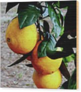 Naval Oranges On The Tree Wood Print