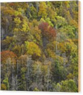 Nc Fall Foliage 0561 Wood Print