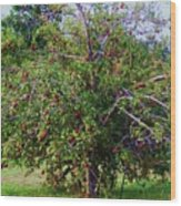 Nc Mountain Apples II Wood Print