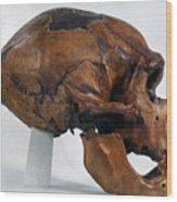 Neanderthal Skull Wood Print