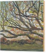 Near Fletcher's Boathouse Wood Print