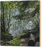 Near Water Of The Forest Lake. Wood Print