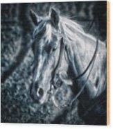 Nebraska Rodeo Roping Horse... Wood Print