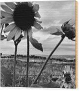 Nebraska Sky Wood Print
