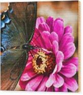 Nectar Feast Wood Print