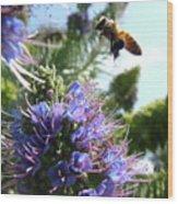 Nectar Landing Wood Print