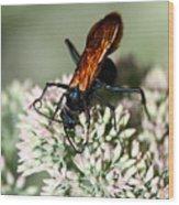 Nectar Lover Wood Print