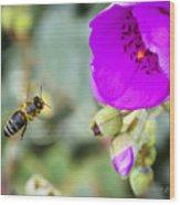 Nectar Run Wood Print