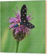 Nectar Time Wood Print