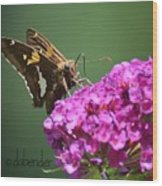 Nectaring Moth Wood Print