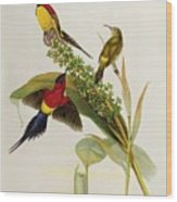 Nectarinia Gouldae Wood Print