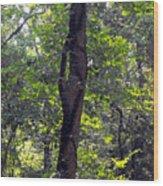 Needle Hook Tree Wood Print