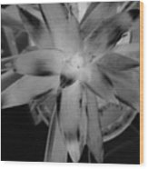 Negative Bromeliad Wood Print