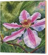 Nelly Moser Clematis Wood Print