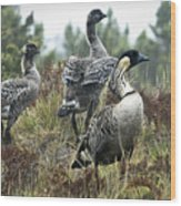 Nene Geese Wood Print