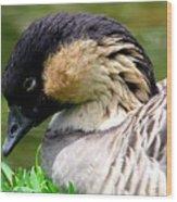 Nene Hawaii State Bird Wood Print