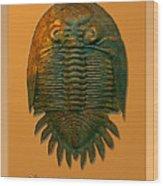Neometacanthus Fossil Trilobite Wood Print