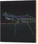 Neon Praying Mantis Wood Print