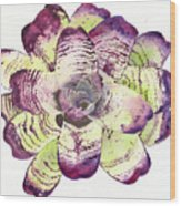 Neoregelia 'freeman's Vision' Wood Print by Penrith Goff