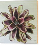 Neoregelia Painted Delight Wood Print by Penrith Goff