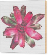 Neoregelia Puppy Love Wood Print by Penrith Goff