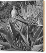Nepenthe Bird Of Paradise B And W Wood Print