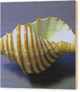 Neptune Whelk Seashell Wood Print