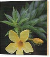 Nerium Oleander In The Rain Wood Print