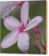 Nerium Oleander, Sri Lanka Wood Print
