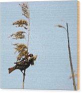 Nest Building Sparrow   Wood Print
