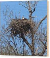 Nesting Bald Eagle Wood Print