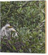 Nesting Chicks Wood Print