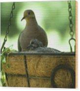 Nesting Doves, Hanging Basket, Balcony Garden, Hunter Hill, May  Wood Print