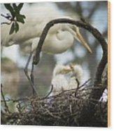Nesting Egret Wood Print