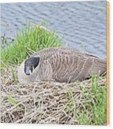 Nesting Goose Wood Print