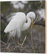 Nesting Great Egret Wood Print