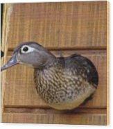 Nesting Hen Wood Duck 1 Wood Print
