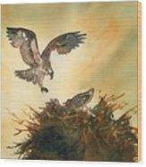Nesting Ospray Wood Print