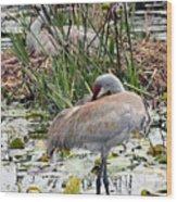 Nesting Sandhill Crane Pair Wood Print by Carol Groenen
