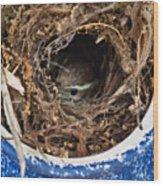 Nesting Wren Wood Print