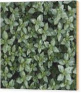 Nettle Wood Print