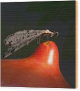 Neuroptera Posing Wood Print